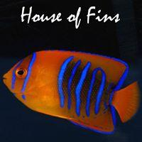 House of Fins